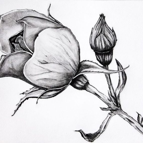Rose Bud Pencil Drawing